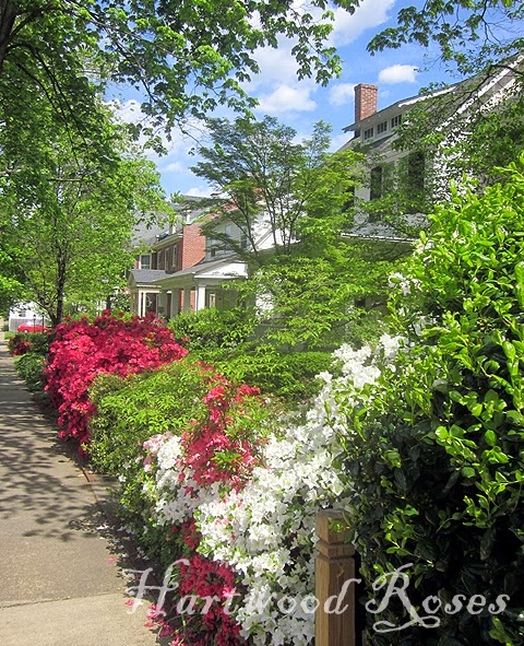 Hartwood Roses: Upcoming Spring Rose and Garden Events in Virginia