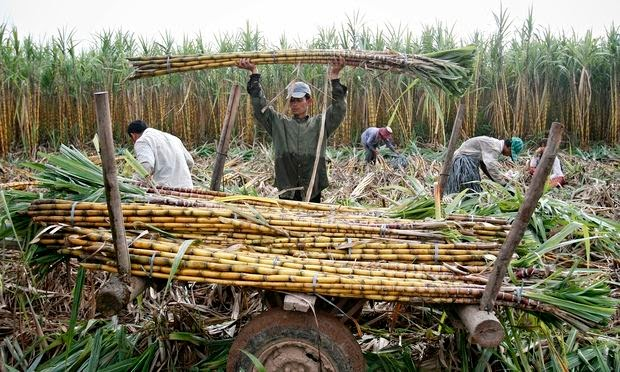 E.U agrees to investigate Cambodian sugar industry