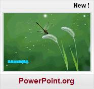 insecte Modeles PPT de presntation gratuits