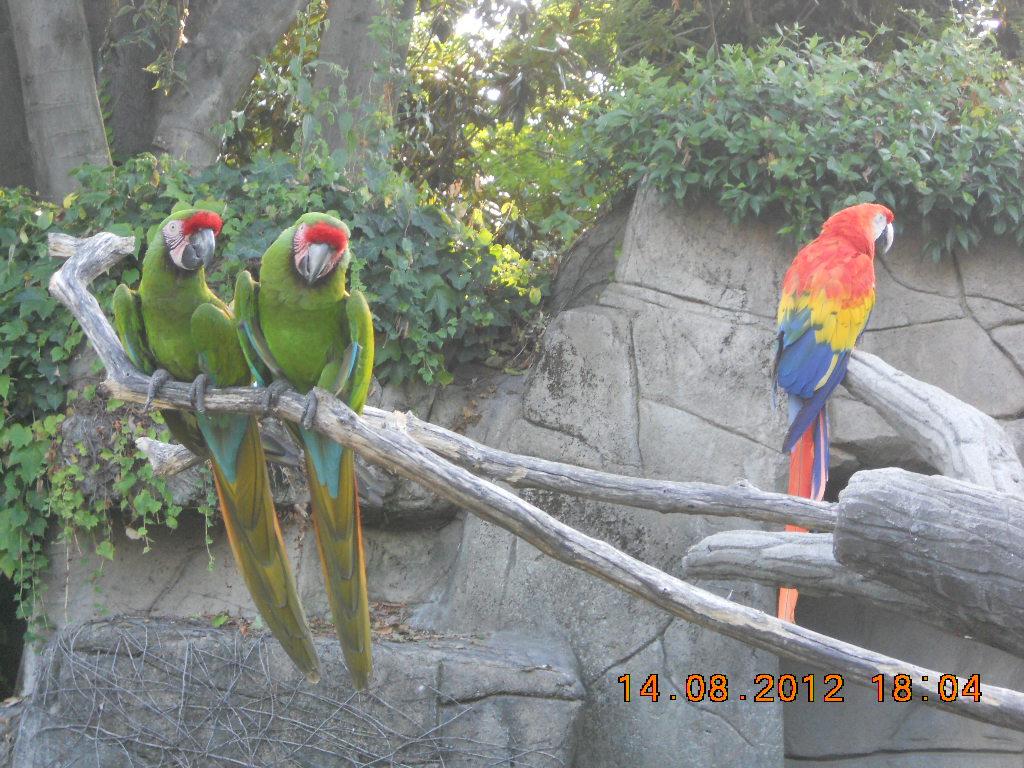 桃子 Momichan\'s Childhood Journal: zoo park Le Cornelle