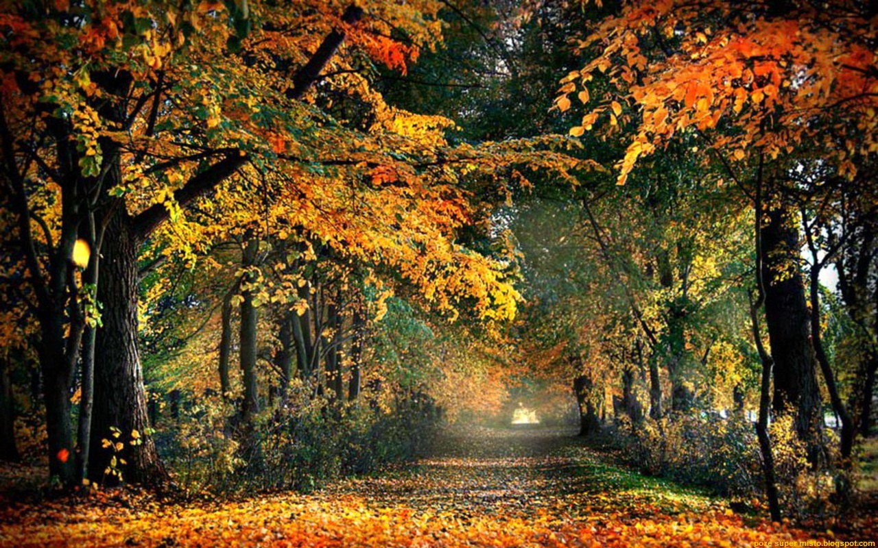 Espocoserio Wallpaper Autumn Road