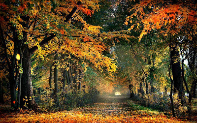 Autumn Road - Nature Wallpapers