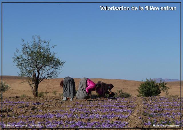 http://www.migdev.org/projets/accompagnement-des-producteurs-du-safran-dans-lamelioration-qualitative-de-leur-production/