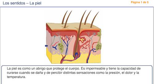 El cuerpo humano 6ºB: Explicación del sentido del tacto