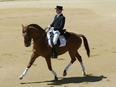El animal m s noble razas de caballos franc s en silla - Caballo silla frances ...