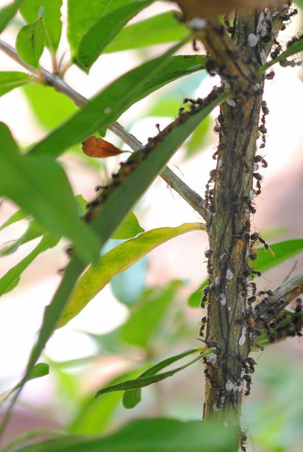 Berkaca Pada Kebersamaan Sebuah Komunitas Semut