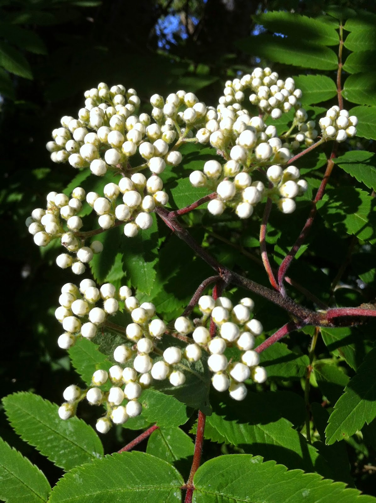 Hage Tre: Vertikal hage plant i hoyden. Botanisk hage på Tøyen og ...