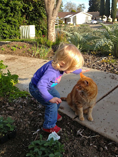 Little Peanut & Neighbor Kitty: A Story in Pictures