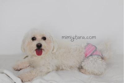 perro con pañal