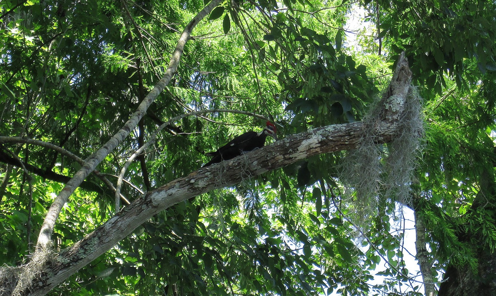 Wekiva River Monkeys Wekiva River This Morning