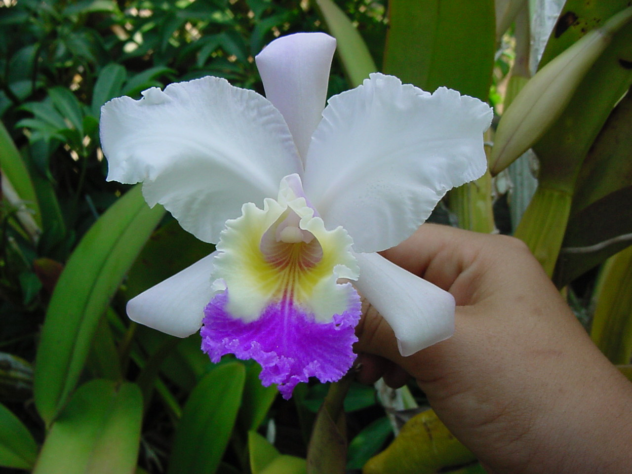 Have You Ever Wondered Where Your Flowers Come From The Orchid