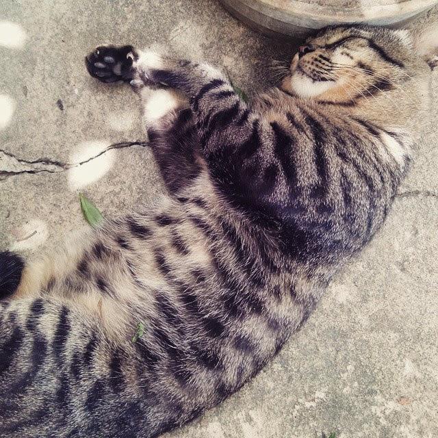 fotos-gatos-fofinhos