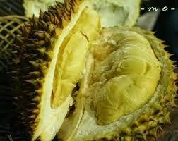 Cara Budidaya Durian Montong yang Benar