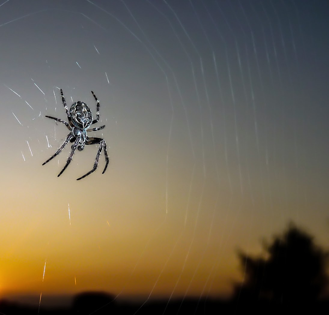 Spider_at_Sunset%255B1%255D.jpg