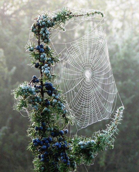 Beautiful Spider Net