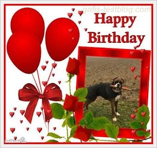 Geburtstagsgrüße für Boxer Amy