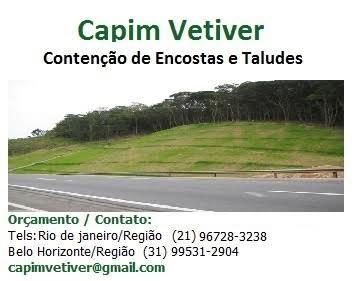 CAPIM VETIVER