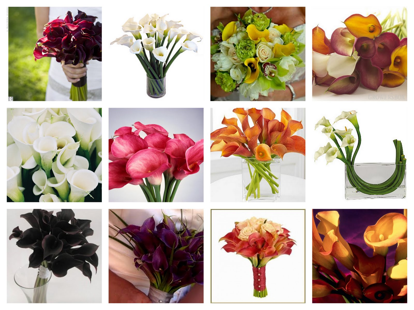 Cis For Calla Lily Flowers 101 St George Party Rentals In