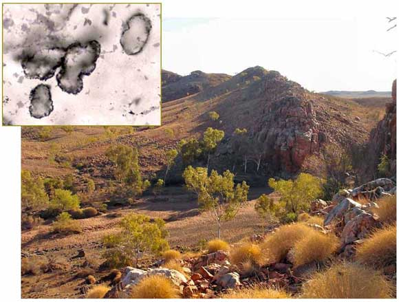 fossils-of-oldest-most-amazing-extinct-animals-oldest-fossil-found-in-australia