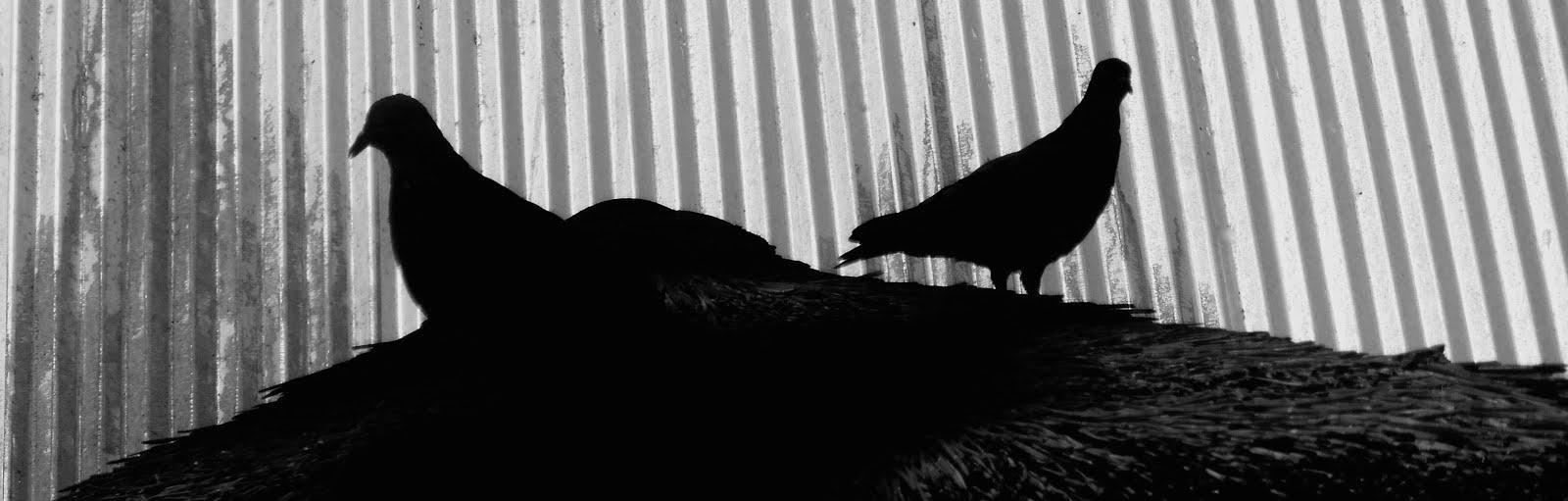 Silhouette Birds