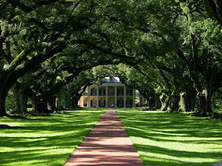 Oak Alley Plantation Tree Tunnel, USA