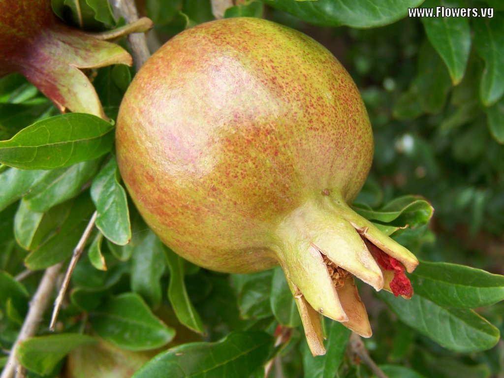 All Kind Of Fruits Photos | Download Photos