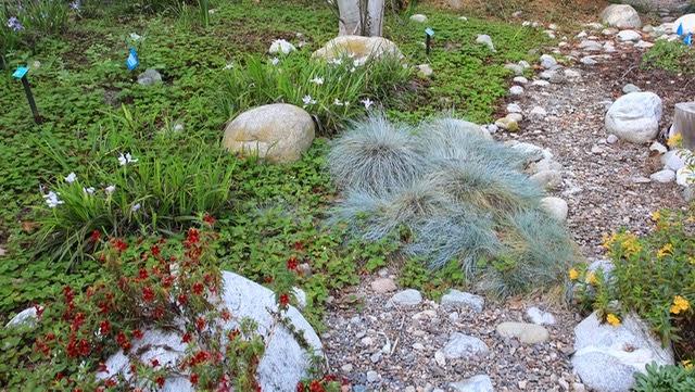 CA Native Garden: A Hidden Gem