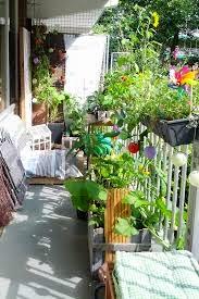 cara menanam sayuran di balkon apartemen