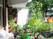 Ide Menanam Sayuran Di Balkon