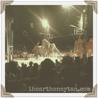 Cole Bros Circus elephants photo