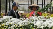 cung cap hoa da lat gia nha vuon