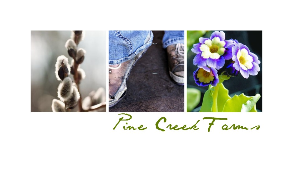 Pine Creek Farm & Nursery