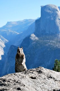 squirrel with half dome in background