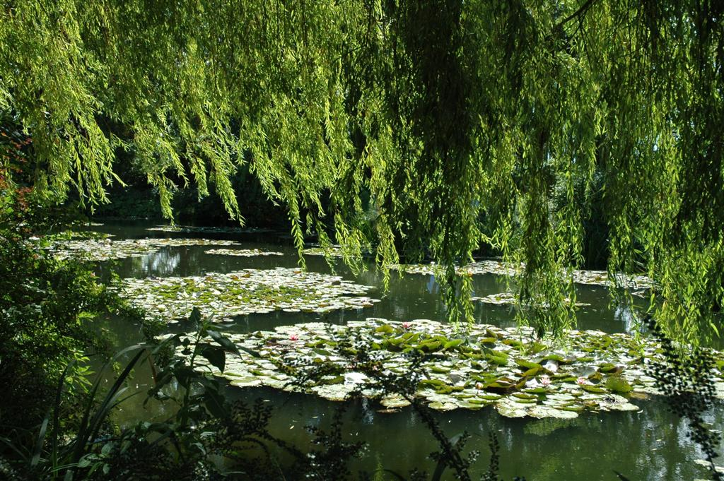 The Garden Wanderer: Monet\'s Garden, Giverny, France