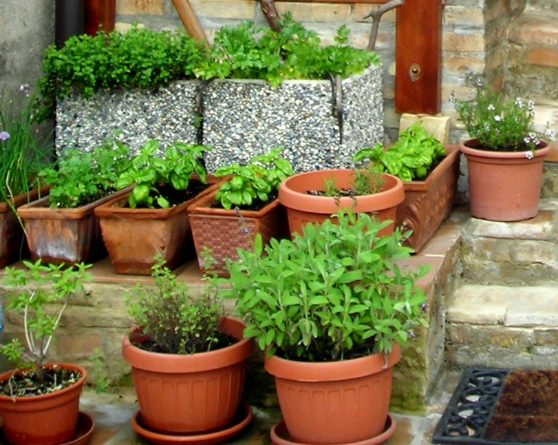 seed to feed me growing herbs in pots. Black Bedroom Furniture Sets. Home Design Ideas