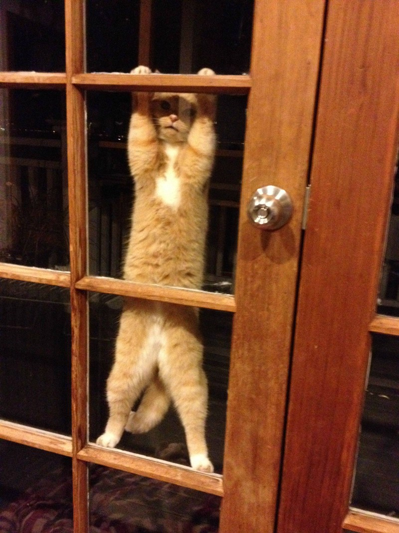 45 pictures of funny cats, cute cat pictures, funny cats