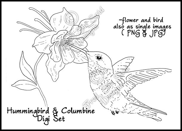 Columbine Flower Line Drawing : The gallery for gt hummingbird and flower line drawing