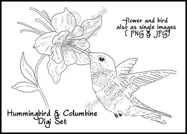 Columbine Flower Line Drawing : Fred she said designs the store hummingbird columbine