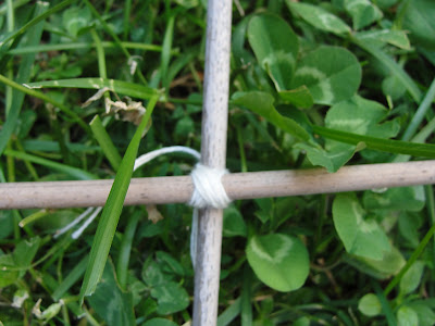 twine wrapped bamboo stakes