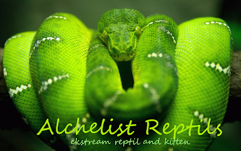 alchelist reptil