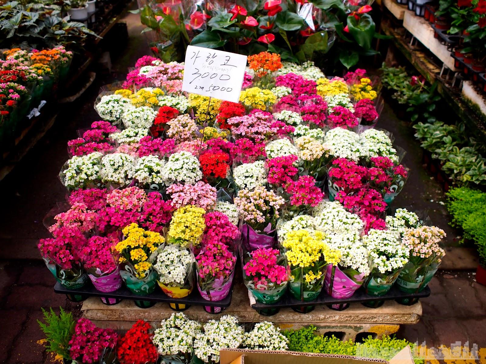 Yangjae Flower Market Travellerelf