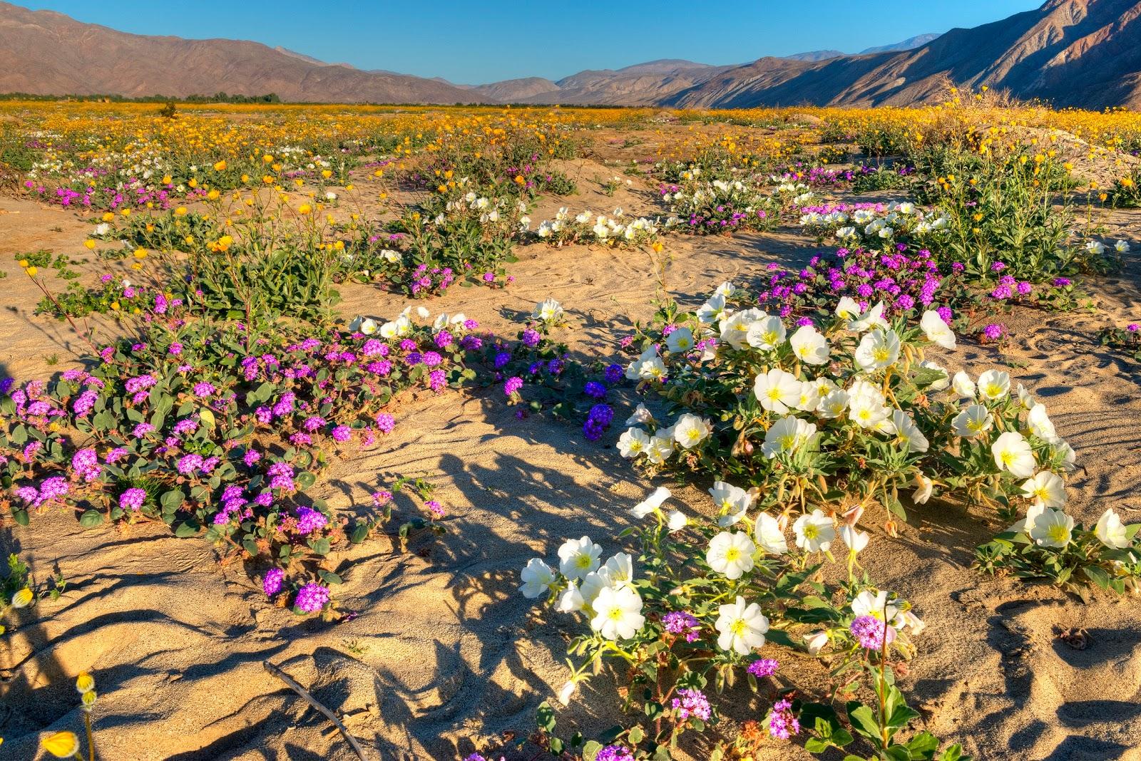 Фото цветов в пустыне