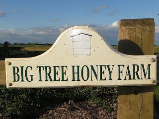 We arrive at Big Tree Honey Farm.