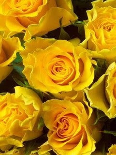 Free mobile wallpaper cell phone yellow roses