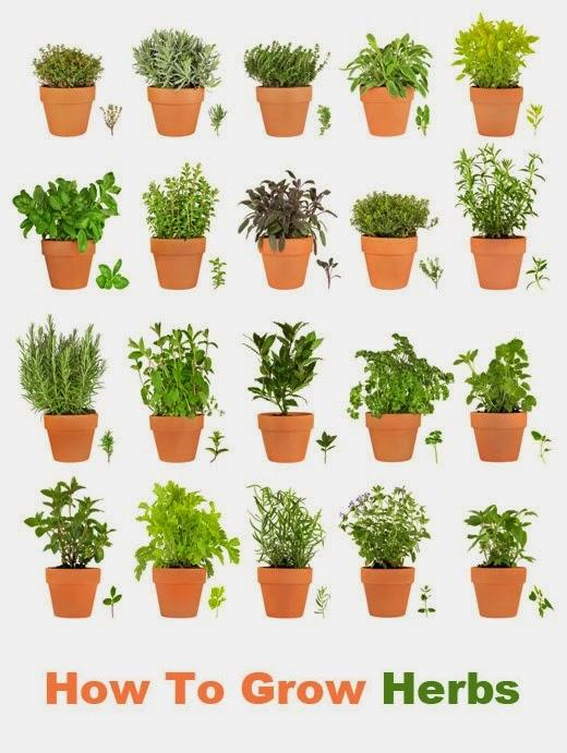 How to Grow Herbs Indoors #Herbs