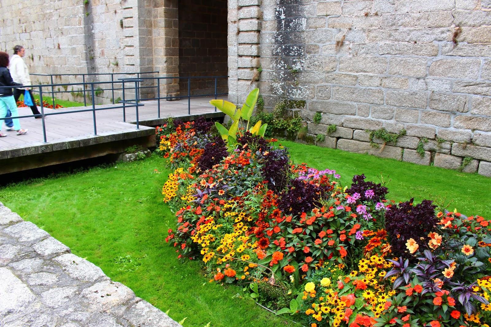 Roses du jardin ch neland un beau massif de plantes for Plante pour massif sans entretien