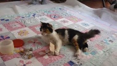 El Quilt de Graciela con su gata...