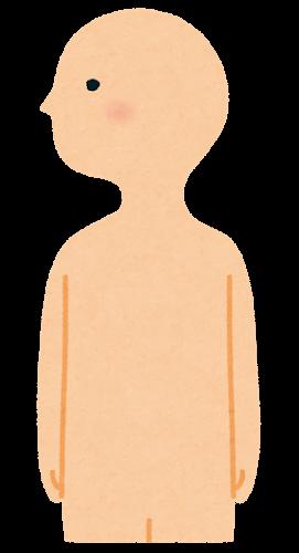 上半身のイラスト(人体)