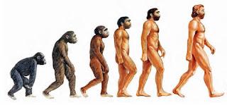 La evolución del hombre, paso a paso.