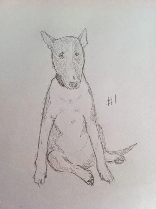 Рисунок бультерьера